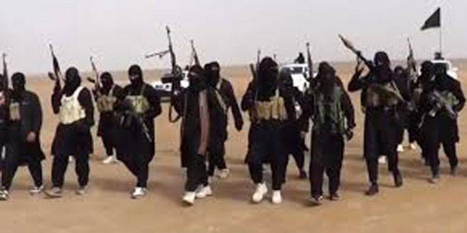 دام برس : دام برس   برلين: 160 إرهابياً ألمانياً قد يكونون قتلوا في سورية والعراق