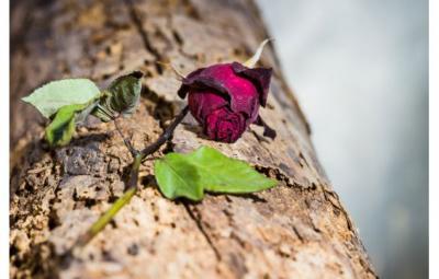 امرأة شاركت زوجها الموت كما شاركته الحياة 52f742bf937c7-shutterstock_174346811