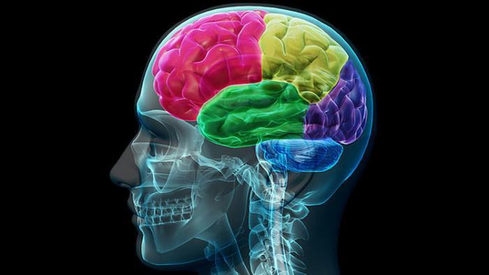 اكتشاف دماغ ثالث الإنسان 55700ed35e85e-556ecba1c46188a27f8b4588.jpg